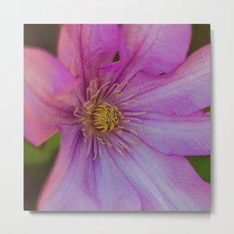Clamatis Flower Metal Print