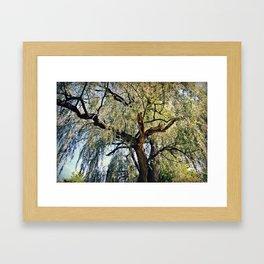 Willow Framed Art Print