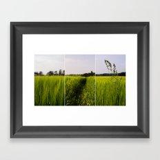 Corn 3 Framed Art Print