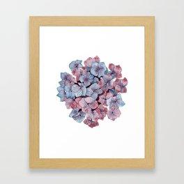 Purple Hydrangea Watercolor Framed Art Print