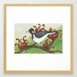 Magpie Lark and Grevilleas Framed Art Print