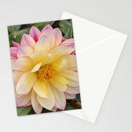 Dahlia Flower Stationery Cards