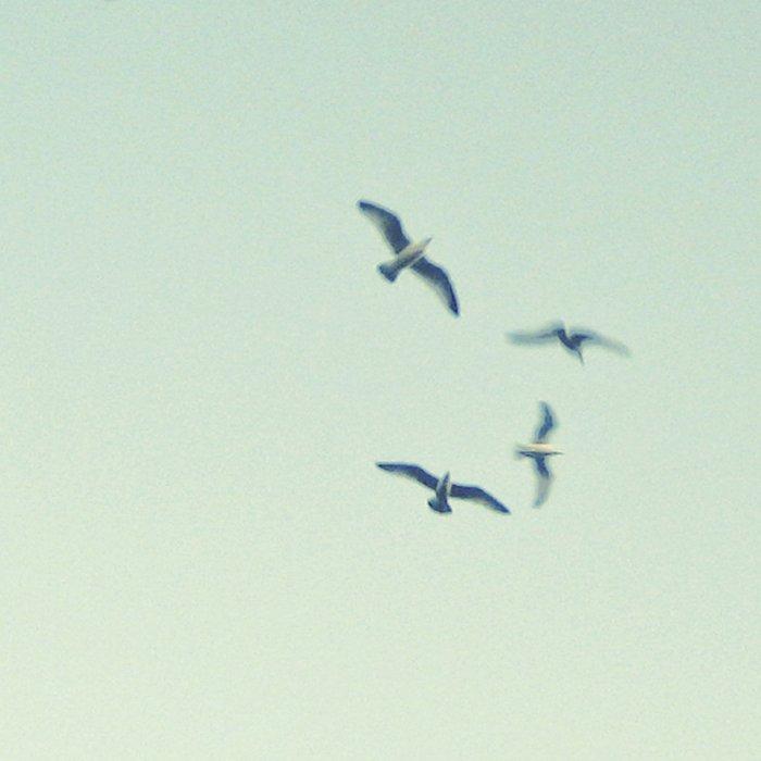 Birds Leggings