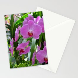 Pink moth orchids Stationery Cards