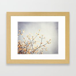 Grey Peach Floral Photography, Neutral Gray Nature Cream Blossoms, Apricot Tree Branches Framed Art Print