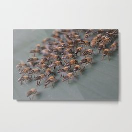 Bees on the hive. Metal Print