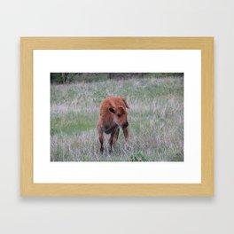 Baby buffalo calf Framed Art Print