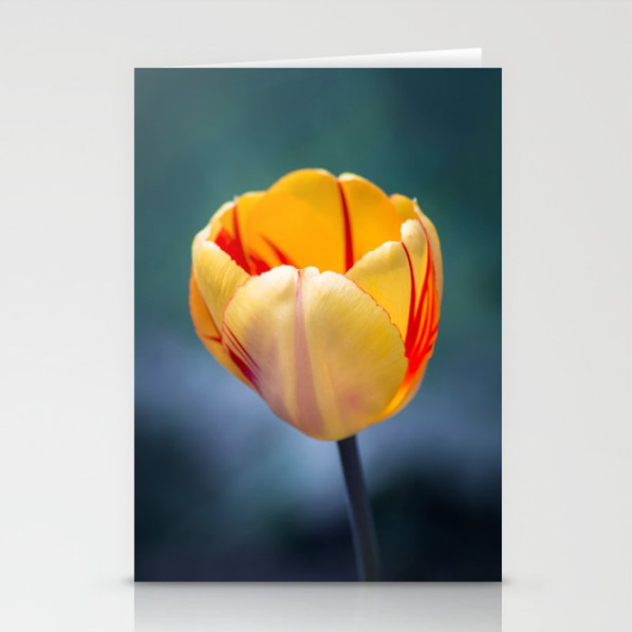 Colorful Tulip Stationery Cards