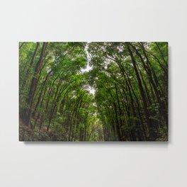 Canopies of Mahogany Metal Print