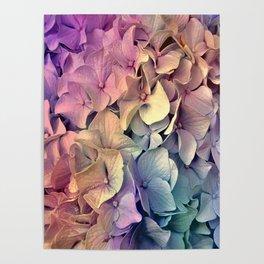 Soft Multi Color Hydrangea Poster