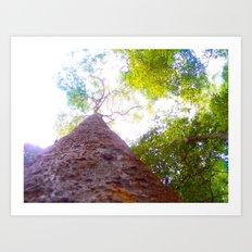 the softness of our sunlight Art Print