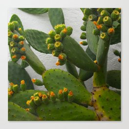 Artsy Cactus Flowers Canvas Print