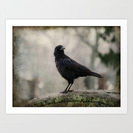 Crow In A Dark Rain  Art Print