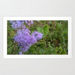 Purple Puffs Art Print