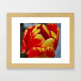 Color Blast Framed Art Print