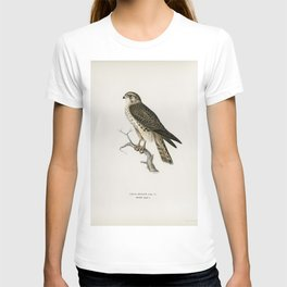 Merlin female (Falco aesalon) illustrated by the von Wright brothers T-shirt
