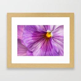 Purple Pansy Flower Close-up #decor #society6 #buyart Framed Art Print