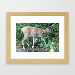 A Fawn Framed Art Print