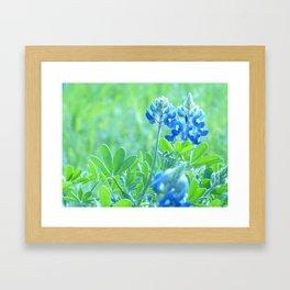 Blue bonnets Framed Art Print
