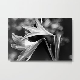 Lilies, black and white Metal Print