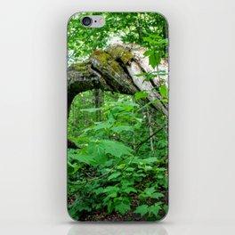 Twisting Tree iPhone Skin