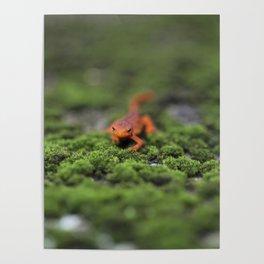Coming For You - Orange Salamander Poster