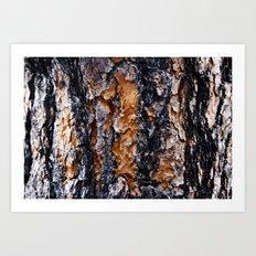 Beautiful Bark Closeup Art Print