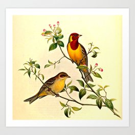 Red-Headed Bunting Art Print