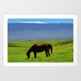 Kamuela Countryside with Mauna Kea Art Print