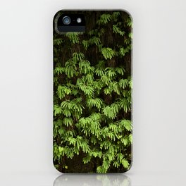 fern canyon iPhone Case
