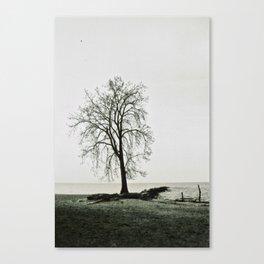 Beach Tree II Canvas Print