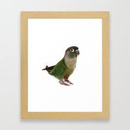 Zeph - Green Cheek Conure Framed Art Print