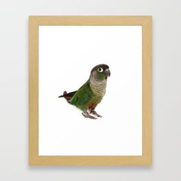 Zeph - Green Cheek Conure Framed Art Print