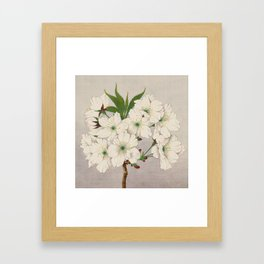 Cascade Fragrance Cherry Blossoms Framed Art Print
