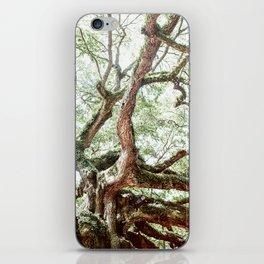 Angel Oak Tree iPhone Skin