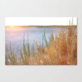 Mediterranean plants during sunset in the Camargue, France Canvas Print