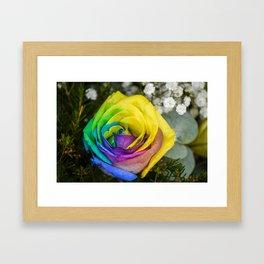 Rainbow Rose Framed Art Print