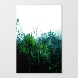 Spider mist Canvas Print