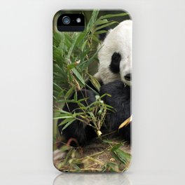 Magnificently Adorable Adult Panda Bear Eating Bamboo Leafs Close Up Ultra HD iPhone Case