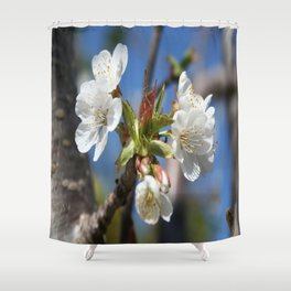 Cherry Blossom In Spring Sunlight Shower Curtain