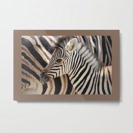Zebra mother with Baby - wildlife Metal Print