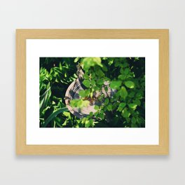 Hiding the the branches Framed Art Print