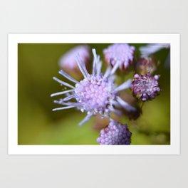 Purple Spiky Flower Art Print