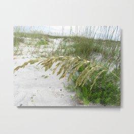 Sea Oats on Cape San Blas Beach Metal Print