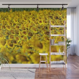 Sunflowers & Sunflower fields of Tuscany, Italy Wall Mural