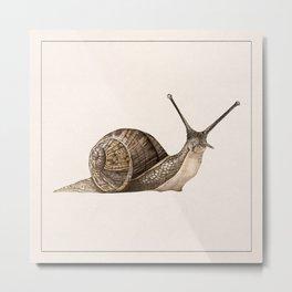 snail II Metal Print