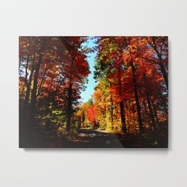 Fall Forest Road Metal Print