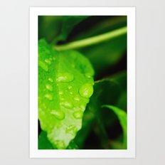 Catching raindrops Art Print