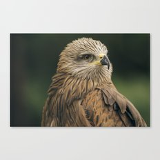 Power Bird II Canvas Print