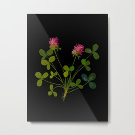 Mary Delany Botanical Vintage Flower Floral Collage Trifolium Pratense Metal Print